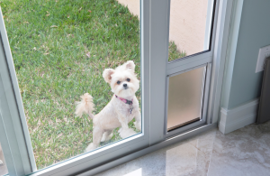 Prices, Options and Sizes for Doggy doors